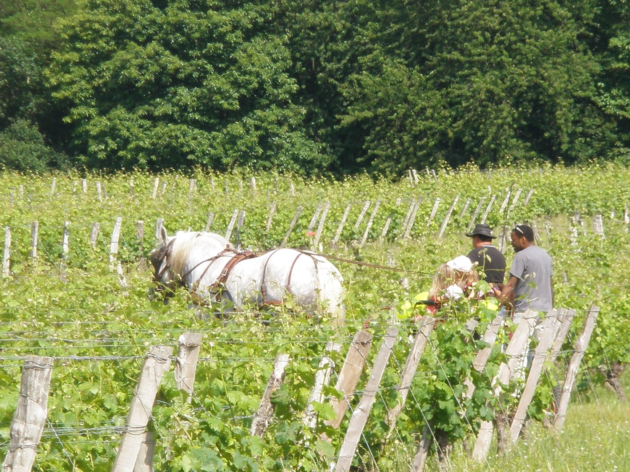 Promenade dans les vignes Domaine des Oucsues